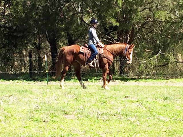 Are not Adult horse lesson riding all